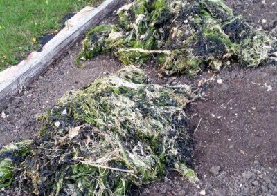 Peter-Seaweed